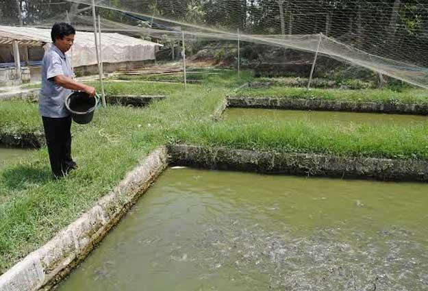 cara-budidaya-ikan-lele-di-kolam-tanah