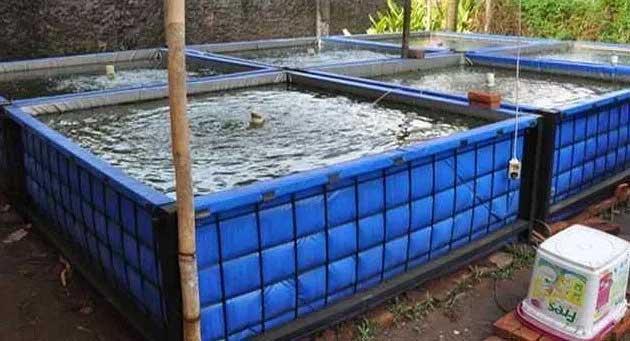 cara ternak lele dalam kolam terpal